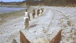 Balade à cheval sur la plage de Saint-Briac-sur-Mer