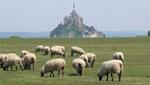Le Mont-Saint-Michel et ses agneaux de prés salés